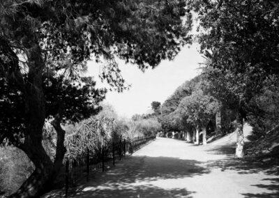 Jardin-de-l-etang-3894